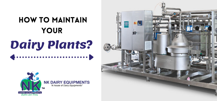 Which essential measures to take care of while maintaining the dairy plants?